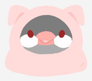 文鳥動物裝-豬