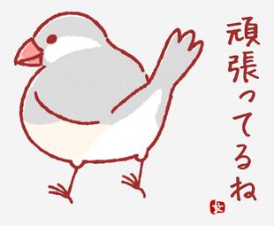 銀文鳥-你很努力呢
