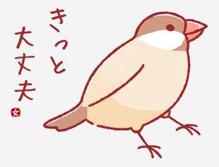 紅文鳥-一定沒問題的