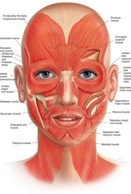 黃天厚-醫生-提升面部輪廓-面部肌肉