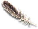 feather 1.png
