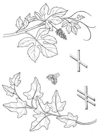 6 vine and ivy.jpg