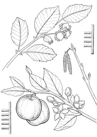 5 hazel and apple.jpg