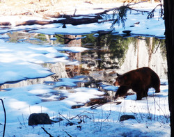 Oh My! A Baby Bear!