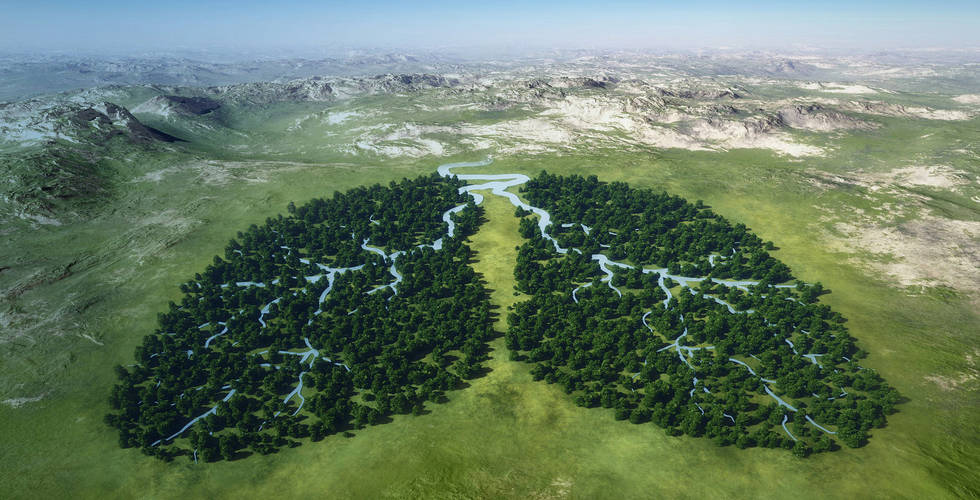Earth lungs forest 1200.jpg