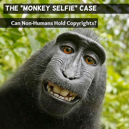 Monkey, smile, kids, selfie, life on land