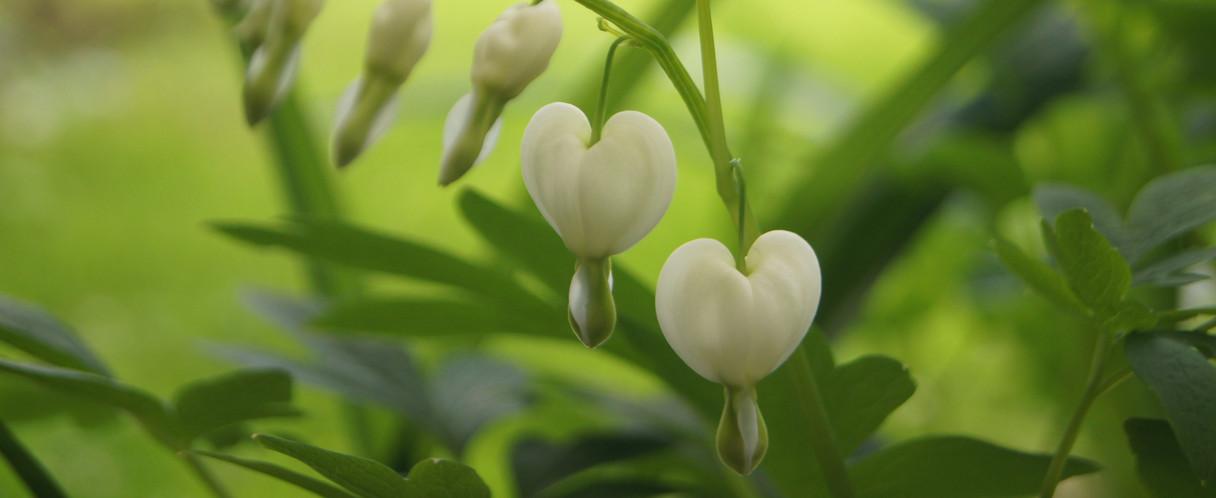 Heartbeat: life movement