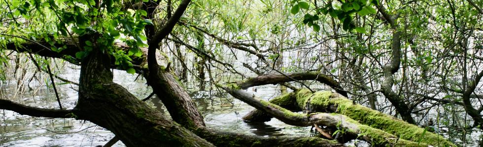 Ein Baum viele Äste, eine Erde viele Menschen
