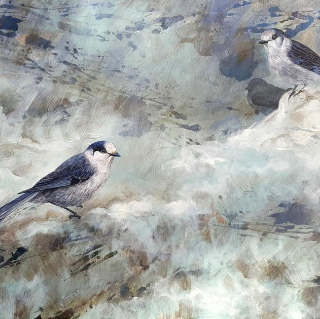 Timeless-1703-National Birds the Gray Jay (36x48in) Mixed Media
