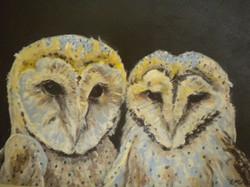 De uilen