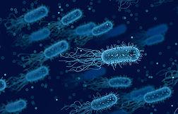 bacteria-3662695_1920.jpg