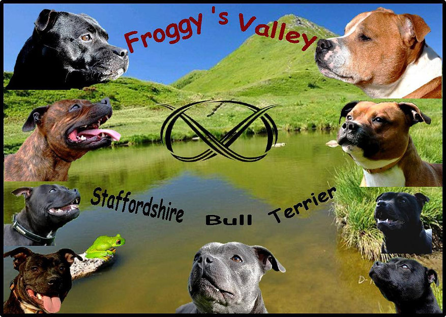 élevage Staffordshire Bull Terrier Froggy's Valley
