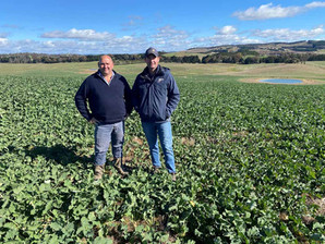 A golden record - 7.16t/ha yield for canola crop