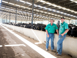 Meating the Market - Feedlot scores high with Holstein herds