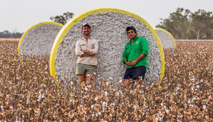 COTTON GROWTH RIPENS WITH A NEW ERA