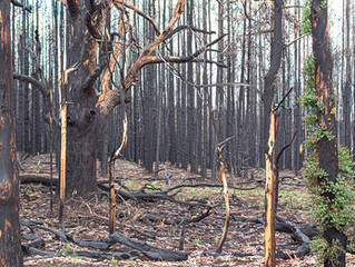 Post by Post - Fencing connections help rebuild bushfire ravaged communities