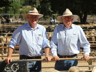 Yarding up - The rise of Delta Livestock