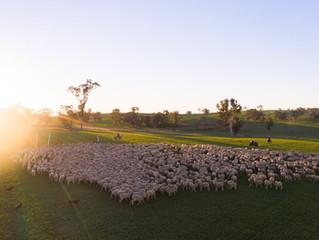 Farming for the future