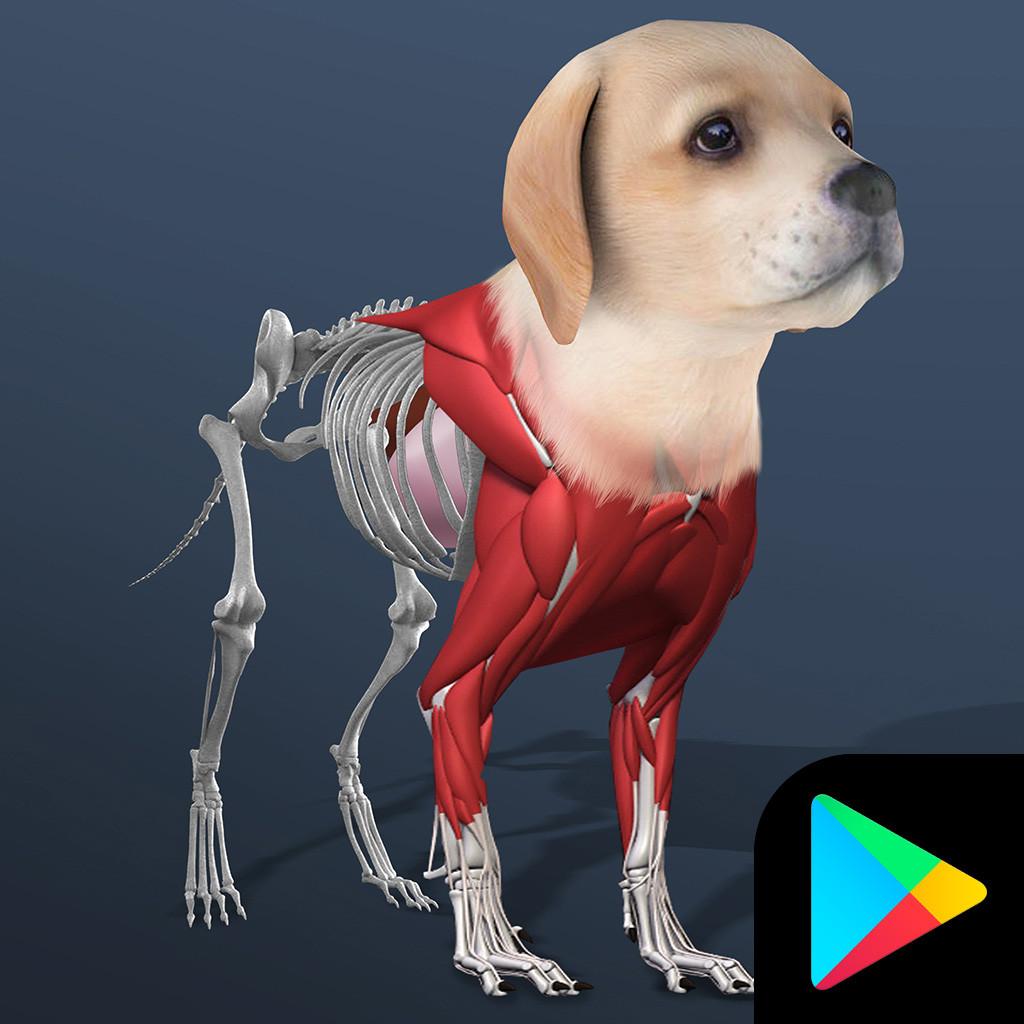 Idle Pet