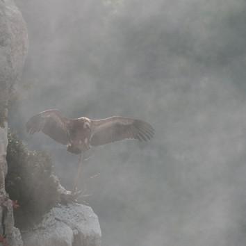 Brouillard. Octobre 2020