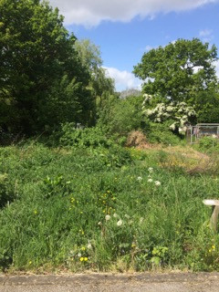 Having an allotment - the unvarnished truth!