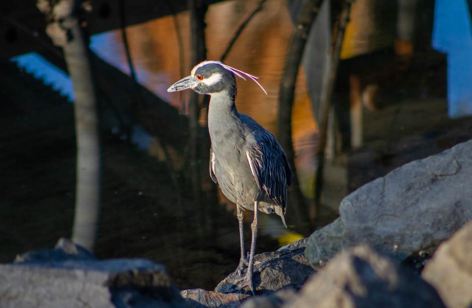Birding San Diego