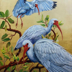 """2nd Place """"Tree Tops with Ibis"""""""