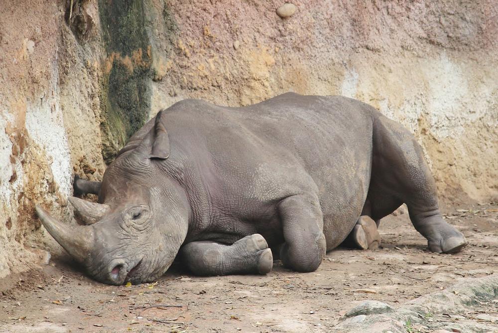 Nosoržci spinkají :)