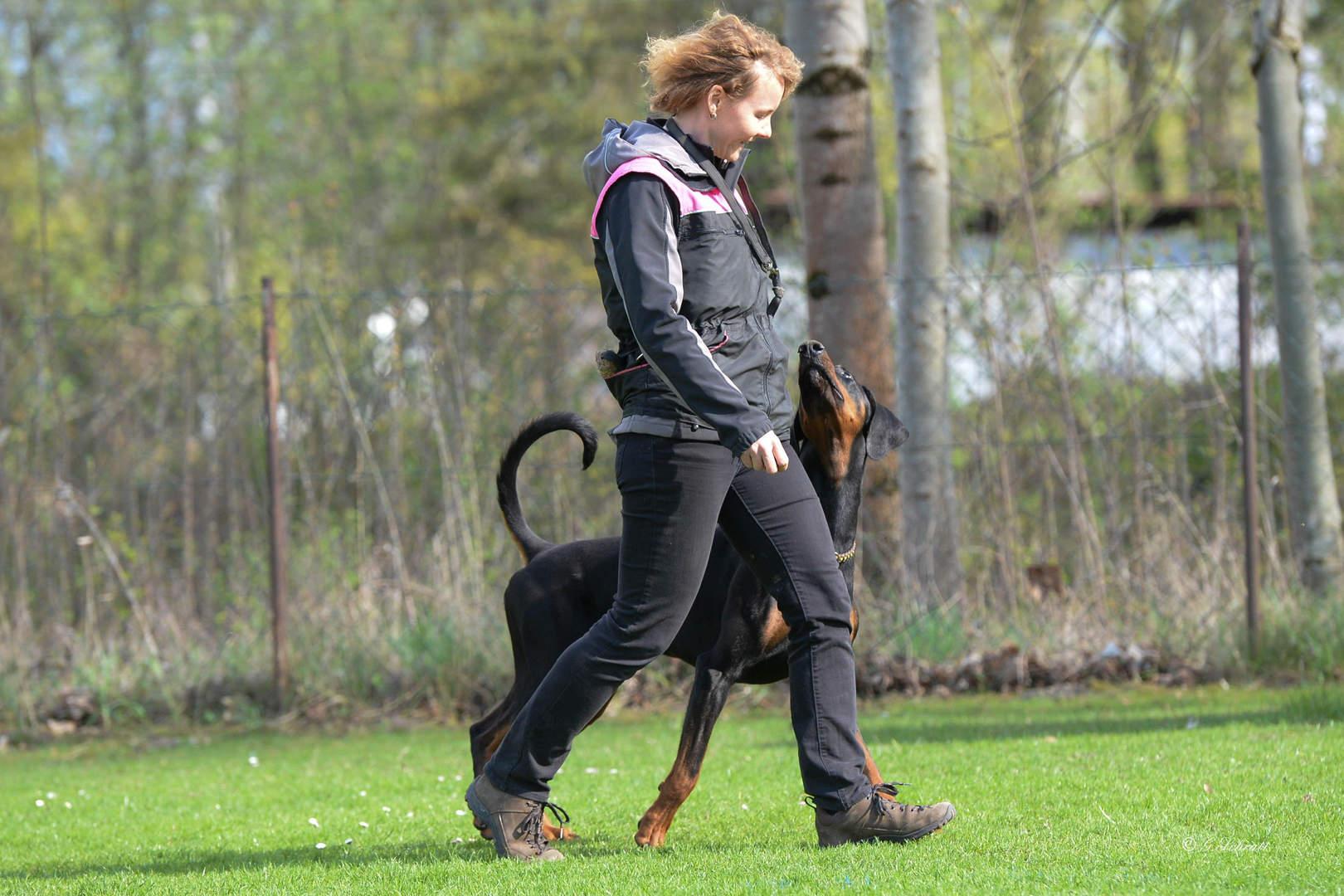 Hundeplatz Obedience Training