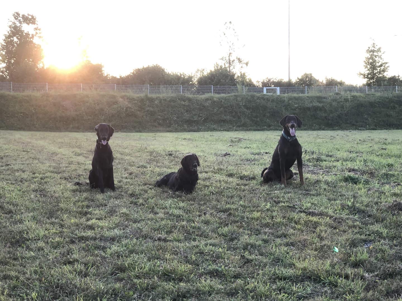 Obedience-Training auf der Wiese