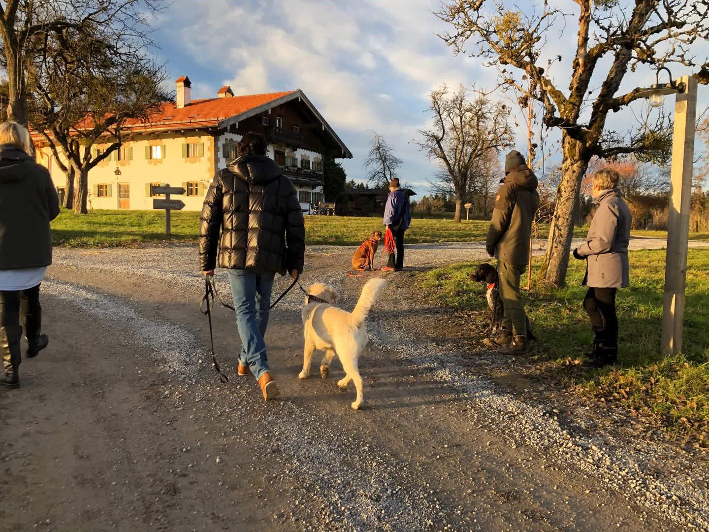 Alltagstraining - Hundebegegnungen