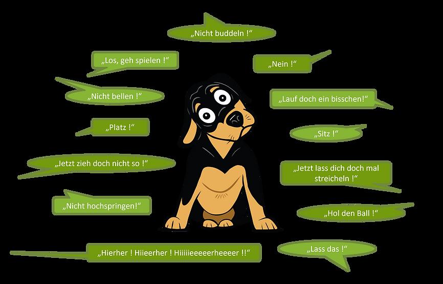 HundVerstehen_1.png