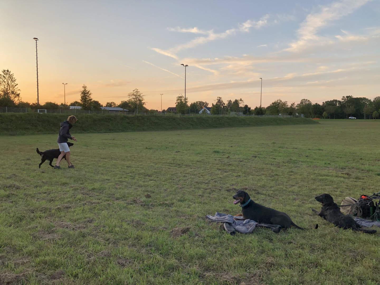 Training auf der Wiese
