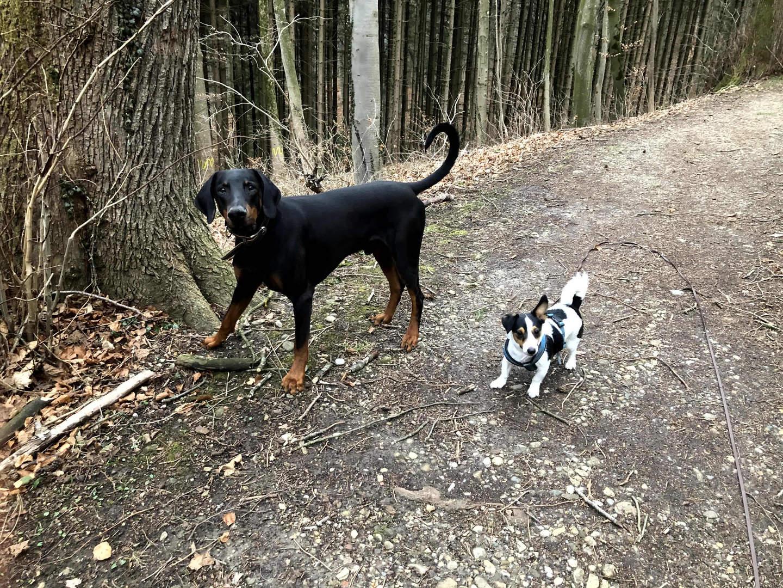 Spaziergang mit Loki