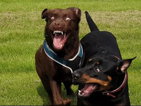 Was haben Hundewiesen und Speed-Dating gemeinsam ?