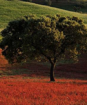 paisagem (12).jpg