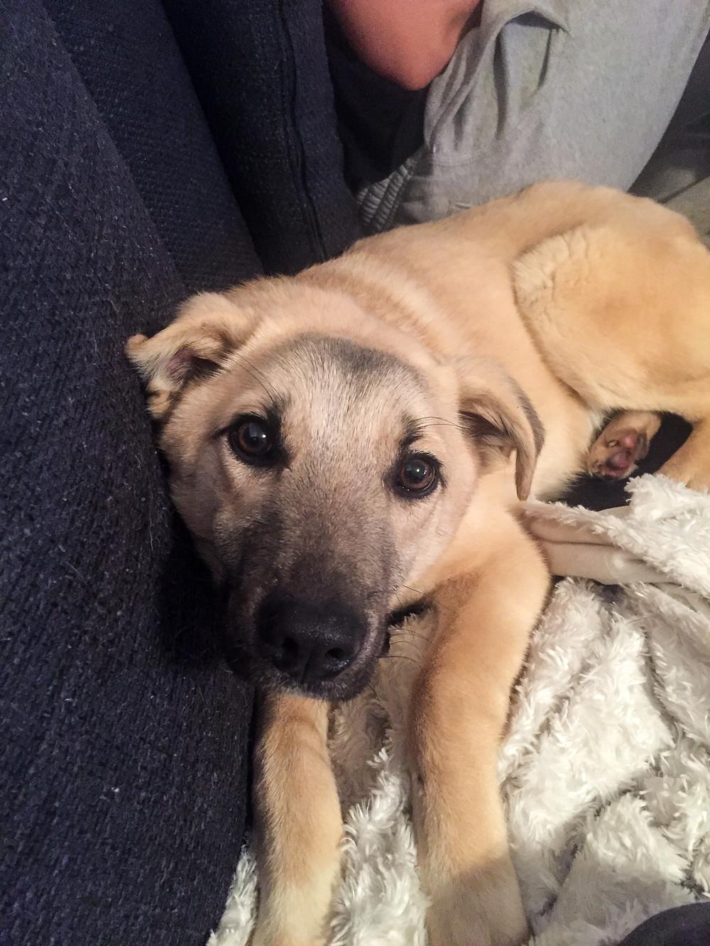 Rescue-pentu sohvalla