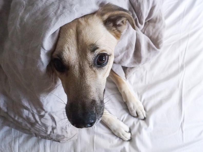 Roskasta aarteeksi – millaista on adoptoida koira