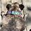 Thumbnail: 1 1/4 inch Sheridan Fox Dog Collar or Leash