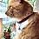 Thumbnail: Maryland Flag Paw Prints Cat Collar