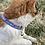 Thumbnail: Rainbow Clouds Cat Collar