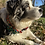 Thumbnail: 1 1/4 inch Christmas Lights Dog Collar or Leash
