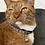 Thumbnail: Trifecta Happy Crab Cat Collar