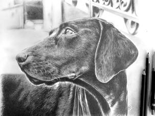 DOG#1