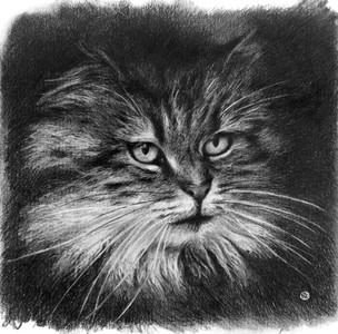 CAT#1