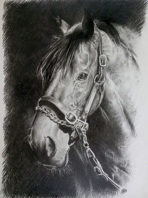 HORSE#1