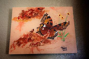 Daisy Butterfly4.JPG