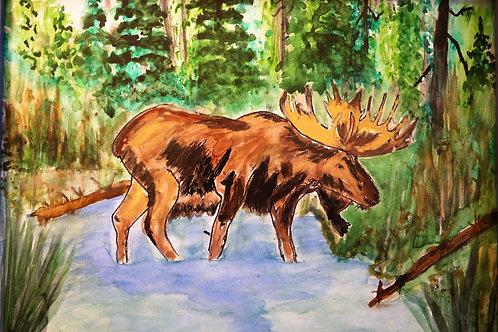 Deep Forest Moose Marsh