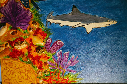 Shark Wall Turks