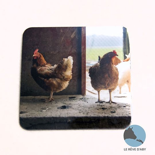 Magnet photo Poules (type 3)